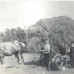 Graan dorsen met een dorsmachine, Zelzate, 1950