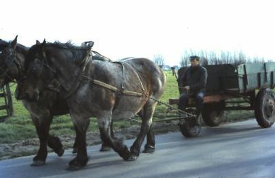 Kar getrokken door paarden, Waarschoot, jaren 1960