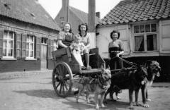 Transport van toen: hondenkar