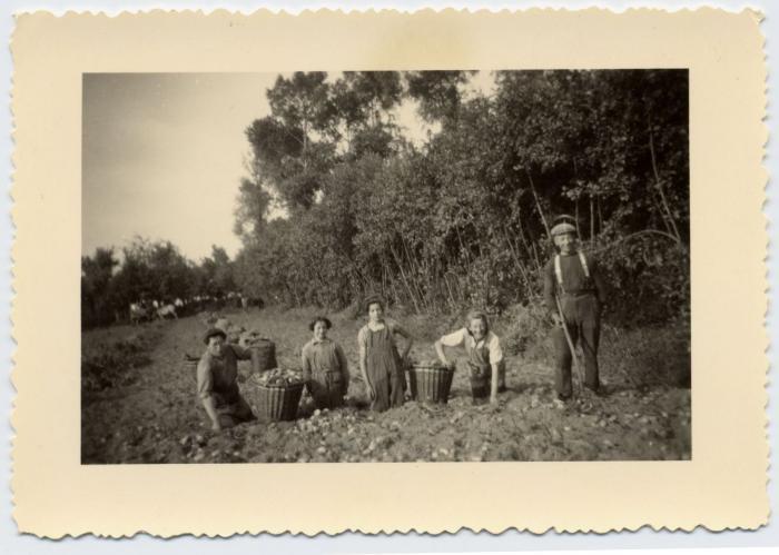 Aardappelen rapen, Bassevelde