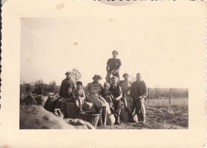Aardappelen rapen door familie Wauters, Kaprijke (?)