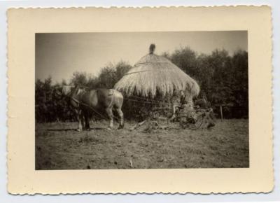 Aardappelrooimachine met paard, Bassevelde