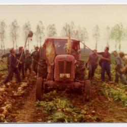 Pauzeren tijdens de oogst, Zomergem