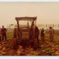 Helpers bij de aardappeloogst, Molenstraat, Kaprijke