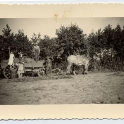 De pikbinder van familie Cuelenaere