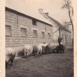 Kinderen tijdens de oorlogsjaren, Sint-Laureins