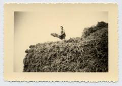 Cyriel Boelens op een opper, Bassevelde