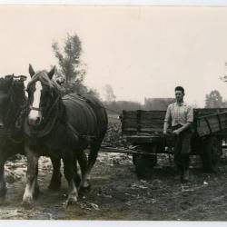 Boeren Jeugdbond, Evergem, 1952
