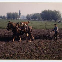 Boeren Jeugdbond, Evergem, 1950