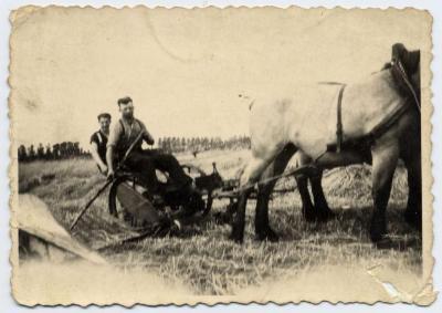 Pikbinder getrokken door paarden (2), Zelzate