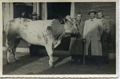Vette Veemarkt Zomergem, ca. 1960