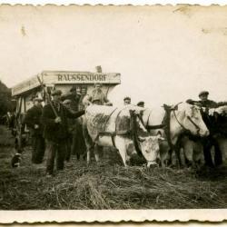 Familie Vermeulen bij slachtrijpe zeug, 1926