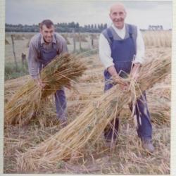 Landbouwer bakt tarwebrood (II)