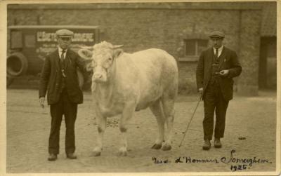 Twee mannen met prijsbeest, Zomergem, 1926