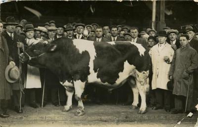 Winnende stier, Zomergem, 1960-1970